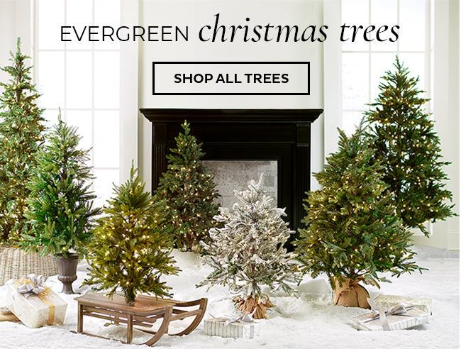 Evergreen Christmad Trees